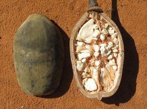 512px-Baobab_-_fruit_(8750413322)